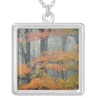 Collier Arbre d'érable rouge, rubrum d'Acer, portrait dans