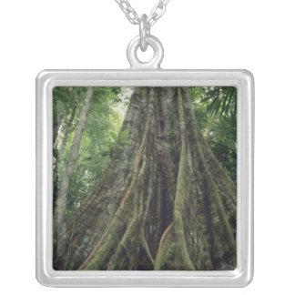 Collier Arbre étayé dans la forêt tropicale, Corcovado