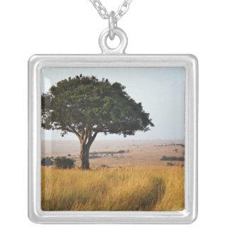Collier Arbre simple d'acacia sur les plaines herbeuses,