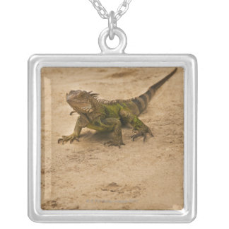 Collier Aruba, lézard sur le sable