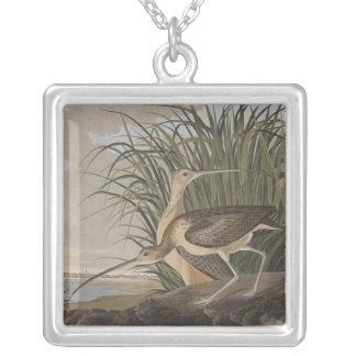 Collier Audubon Long-A affiché le bécasseau de courlis
