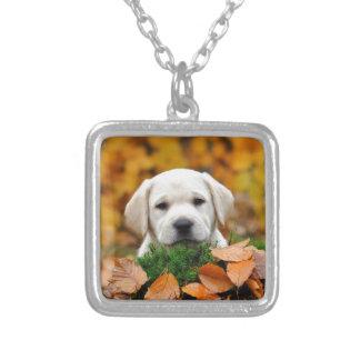 Collier Automne Labrador