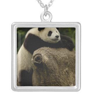 Collier Bébé de panda géant (melanoleuca d'Ailuropoda)