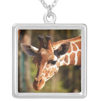 Collier Brown mignon et portrait blanc de visage de girafe