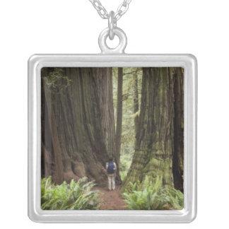 Collier CA, parc d'état de séquoias de Jedediah Smith,