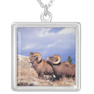 Collier Canadensis d'Ovis de deux RAM de mouflon
