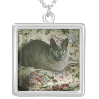 Collier Chat, Minnie, Tonkinese.