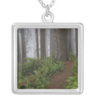 Collier Chemin à travers les arbres géants de séquoia
