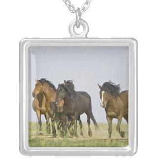 Collier Chevaux sauvages sauvages 3 de caballus d'Equus de