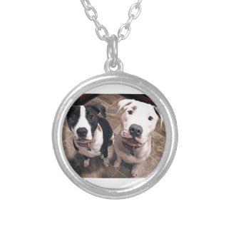 Collier chiens de chiots adorables de pitbull