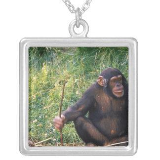 Collier Chimpanzé utilisant le bâton comme outil à obtenir