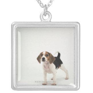 Collier Chiot de beagle