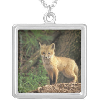 Collier Chiot de Fox rouge devant le repaire (vulpes de