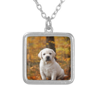 Collier Chiot de labrador retriever