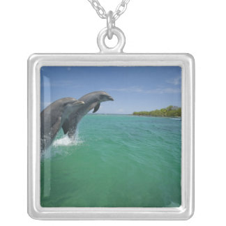 Collier Dauphins de Bottlenose (truncatus de Tursiops)