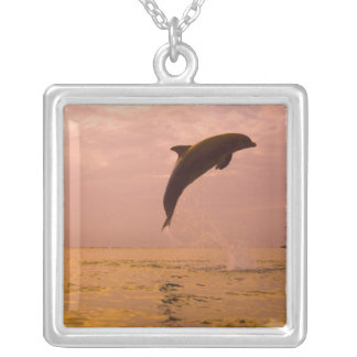 Collier Dauphins de Bottlenose (truncatus de Tursiops) 2