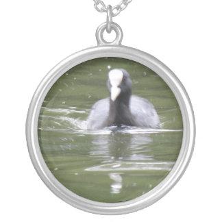 Collier de natation de foulque maroule