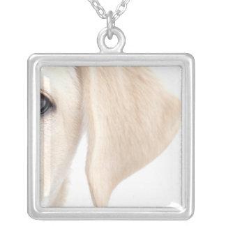 Collier Demi de visage en gros plan de Labrador jaune
