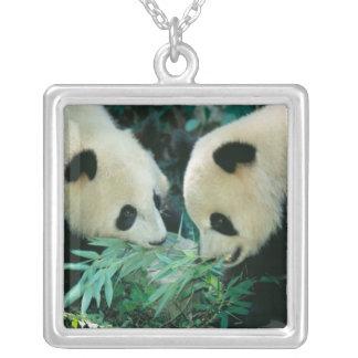 Collier Deux pandas mangeant le bambou ensemble, Wolong,