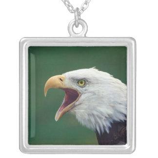 Collier Eagle chauve (leucocephalus de Haliaeetus)