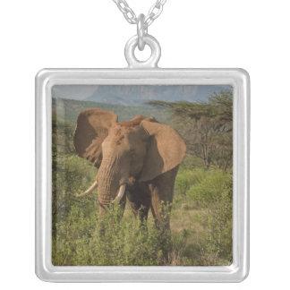 Collier Éléphant africain, africana de Loxodonta, dans