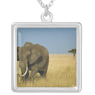 Collier Éléphant africain frôlant dans l'herbe grande