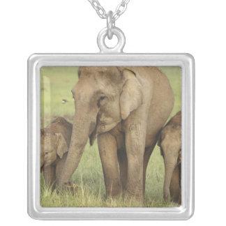 Collier Éléphant indien/asiatique et jeunes ceux, Corbett