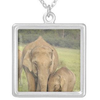 Collier Éléphant indien/asiatique et jeunes un, Corbett