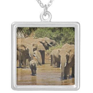 Collier Éléphants africains, Loxodonta Africana, Samburu
