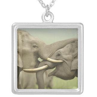 Collier Éléphants indiens/asiatiques jouent le combat,