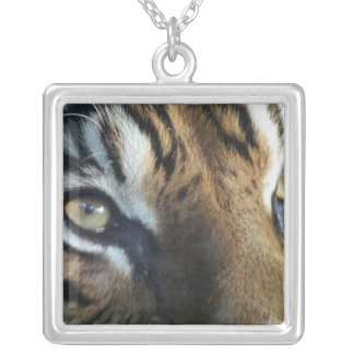 Collier Fermez-vous d'un tigre de Sumatran de mâle adulte