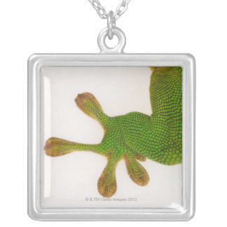 Collier Gecko de jour du Madagascar (madagascariensis 2 de