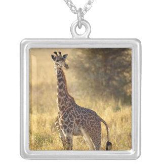 Collier Girafe juvénile, camelopardalis 2 de Giraffa