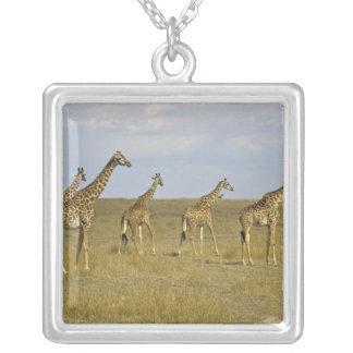 Collier Girafes de Maasai errant à travers le Maasai Mara