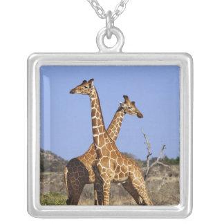 Collier Girafes réticulées, camelopardalis 3 de girafe