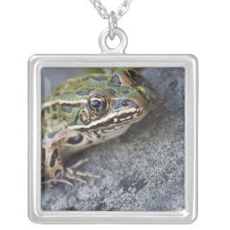 Collier Grenouille de léopard du nord, île transparente,
