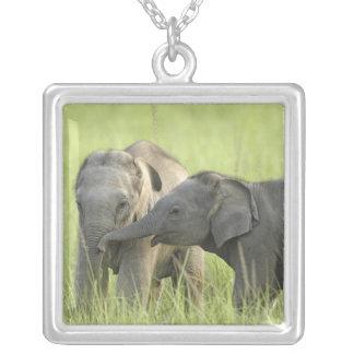 Collier Jeunes ceux d'éléphant indien/asiatique