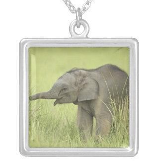 Collier Jeunes un d'éléphant indien/asiatique, Corbett