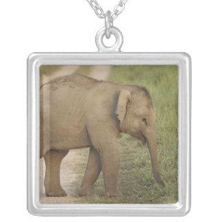 Collier Jeunes un d'éléphant indien/asiatique sur