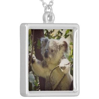 Collier koala doux 2b