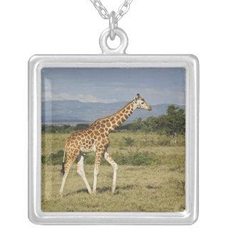 Collier La girafe de Rothschild, camelopardalis de Giraffa