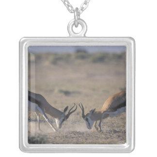 Collier La Namibie, parc national d'Etosha, mâle deux