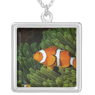 Collier La Papouasie-Nouvelle-Guinée, anemonefish faux de