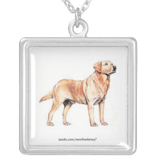 Collier Labrador retriever