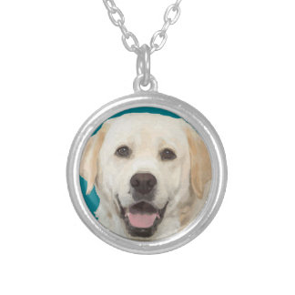 Collier Labrador retriever 1