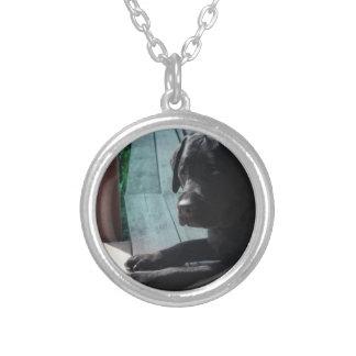 Collier Labrador retriever noir personnalisable
