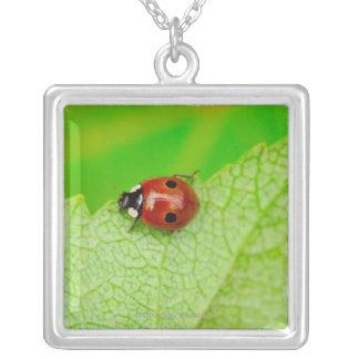 Collier Ladybird marchant à travers une feuille