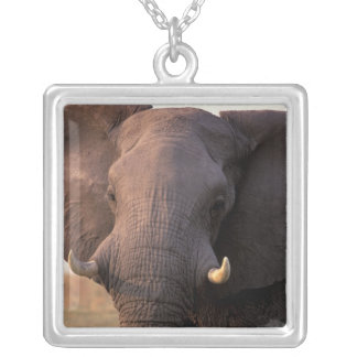 Collier L'Afrique, Botswana, delta d'Okavango. Éléphant
