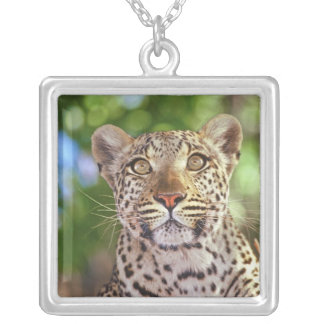 Collier L'Afrique, Botswana, delta d'Okvango, léopard