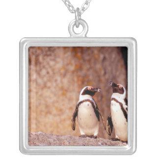 Collier L'Afrique du Sud, ville de Simons. Pingouins d'âne